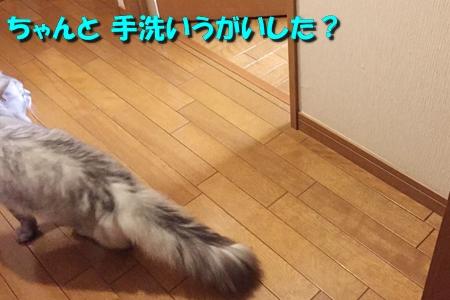 たまさぶのしごと(監視編)2