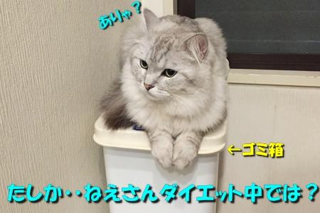 たまさぶのしごと(監視編)8