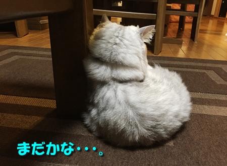 一日千秋5