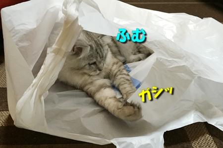 買い物袋リベンジ1