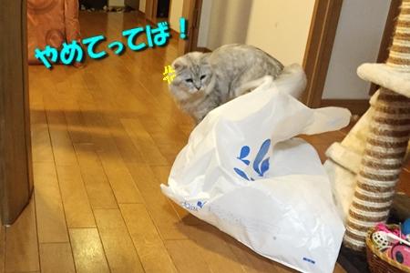 買い物袋リベンジ9