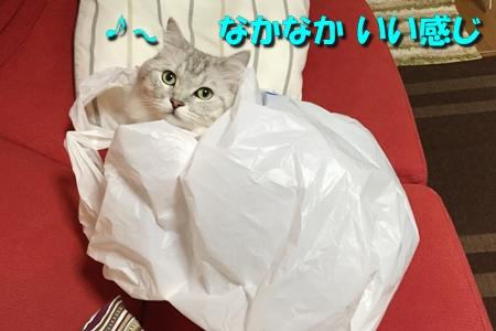 買い物袋リベンジ3