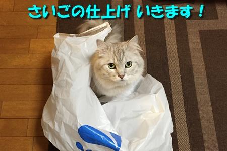 買い物袋リベンジ4