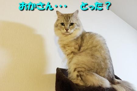 ハンター魂7