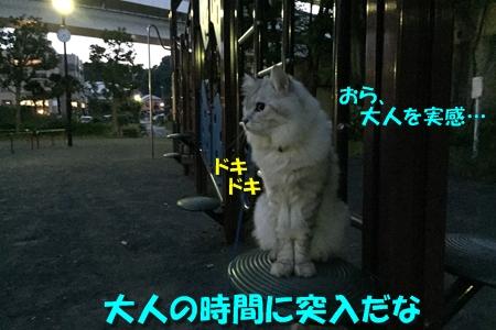 日暮れ散歩7
