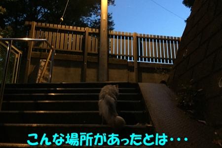 日暮れ散歩8