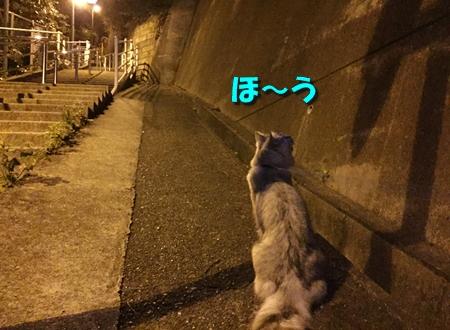 日暮れ散歩9