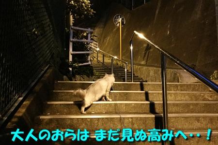 日暮れ散歩10