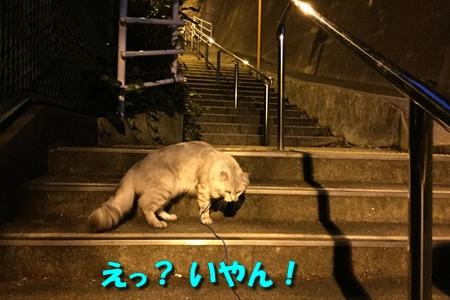 日暮れ散歩11