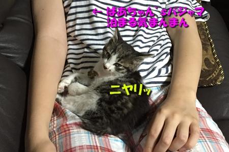 ななちゃん日記3