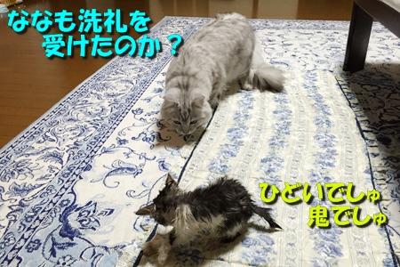 ななちゃん日記2