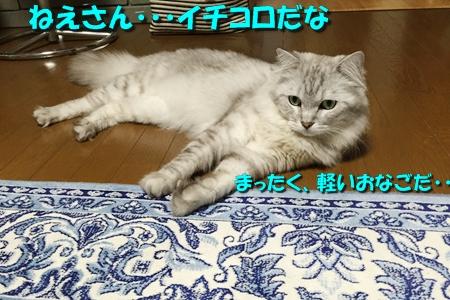 ななちゃん日記4