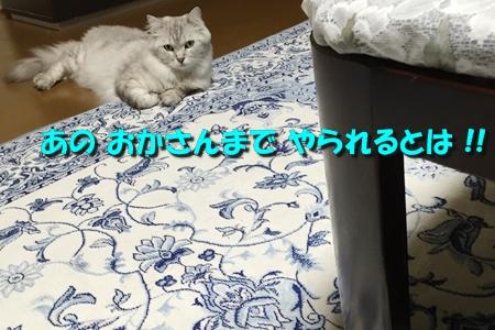 ななちゃん日記7