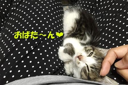 ななちゃん日記8