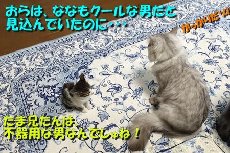 ななちゃん日記12