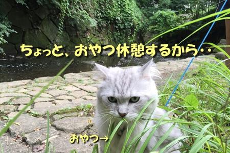 お散歩10