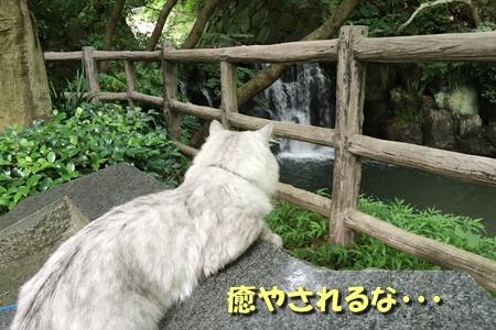 お散歩12