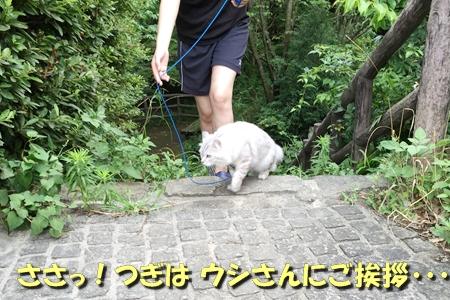 お散歩13