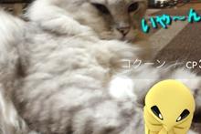 ポケモンGO14