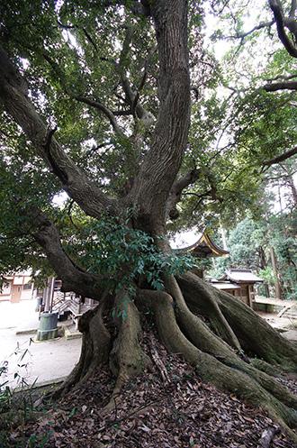 160316佐原市諏訪神社④