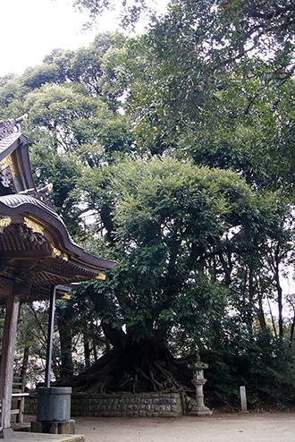 160316佐原市諏訪神社⑧
