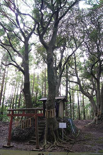 160316麻賀多子安神社①