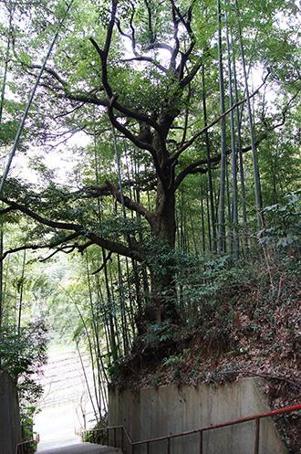 160316麻賀多神社②