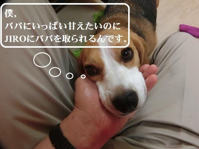 CIMG3363.jpg