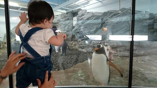 2016-6-7ペンギン