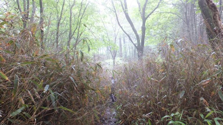 笹藪を下山