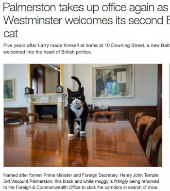 newsPalmerston takes up office again as Westminster welcomes its second Battersea cat