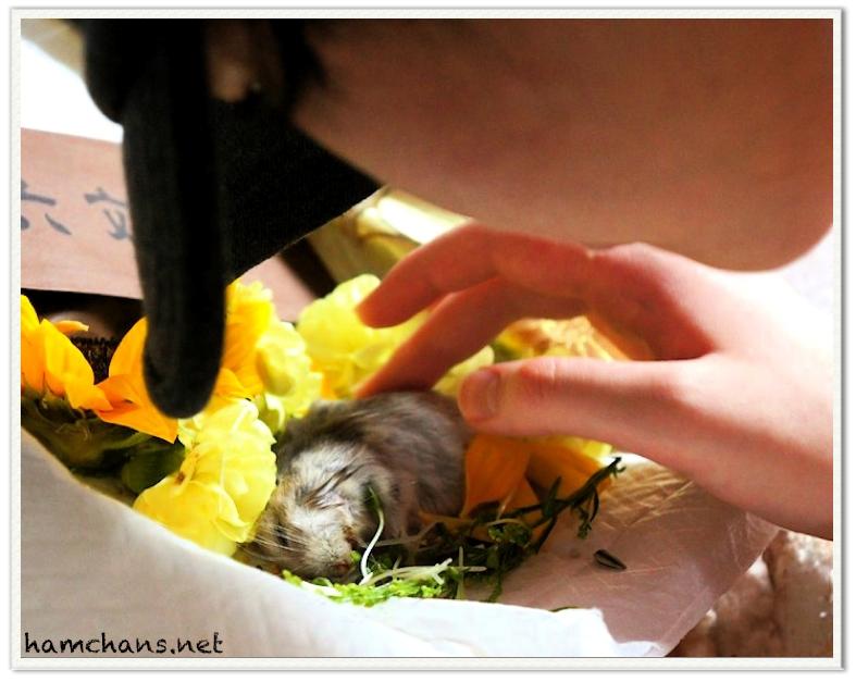 ハムスターの葬儀3