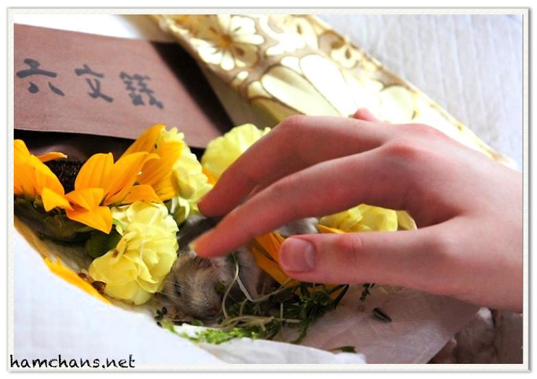 ハムスターの葬儀4