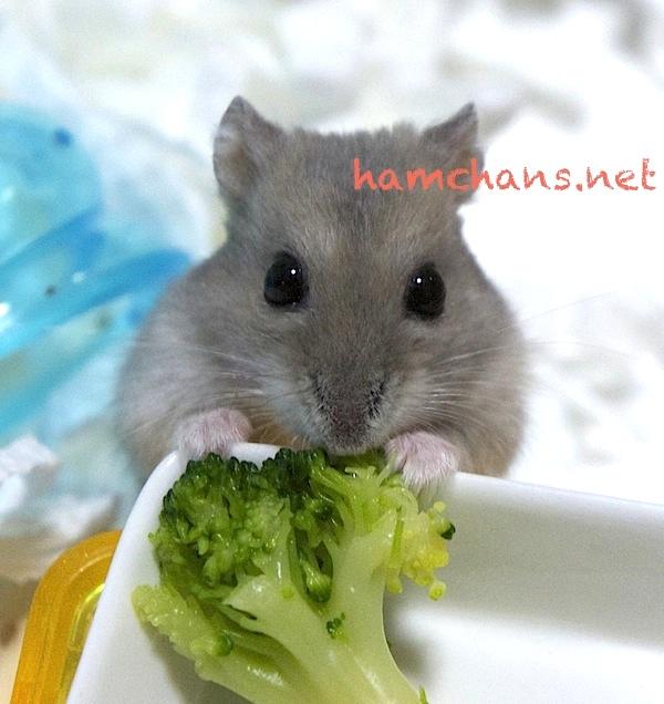 ハムスター2