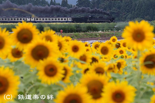 20120811野沢025D2