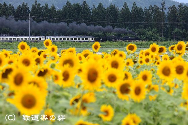 20120811野沢035D2