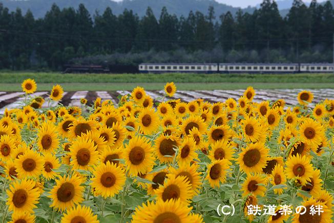 20120811野沢045D2