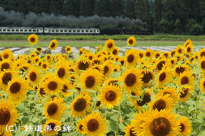 20120812野沢