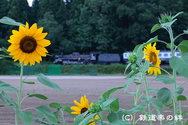 20120819野沢025D2