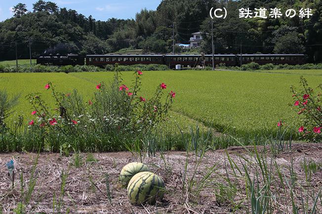 20120825笹原田5D2