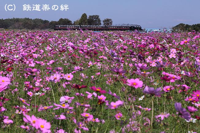 20121020益子015D2