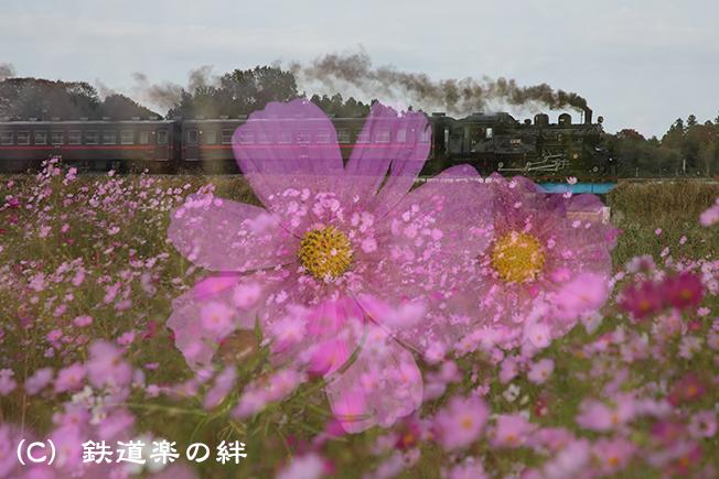 20121020益子025D3