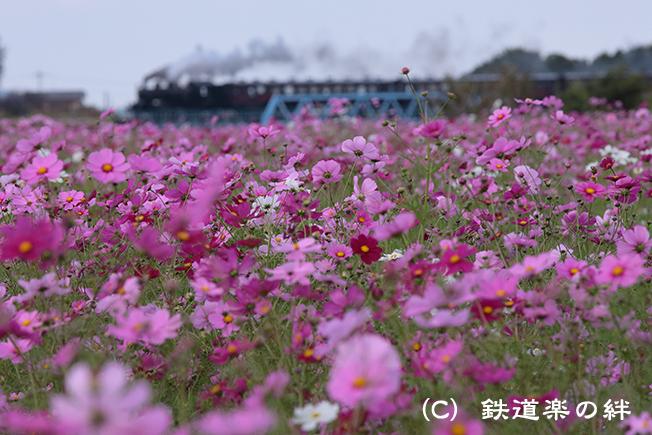 20121020益子025D2
