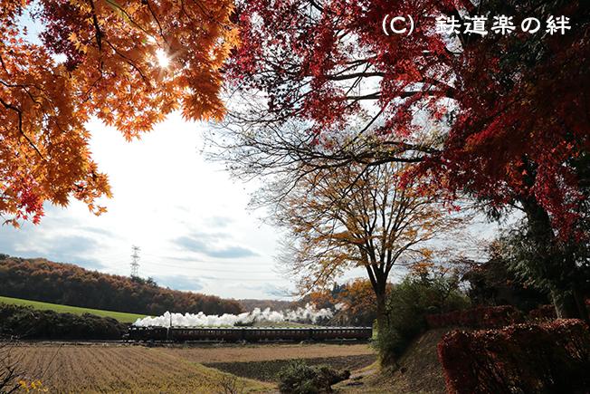 20121124笹原田5D3