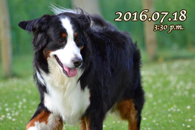 02_2016072013154040e.jpg