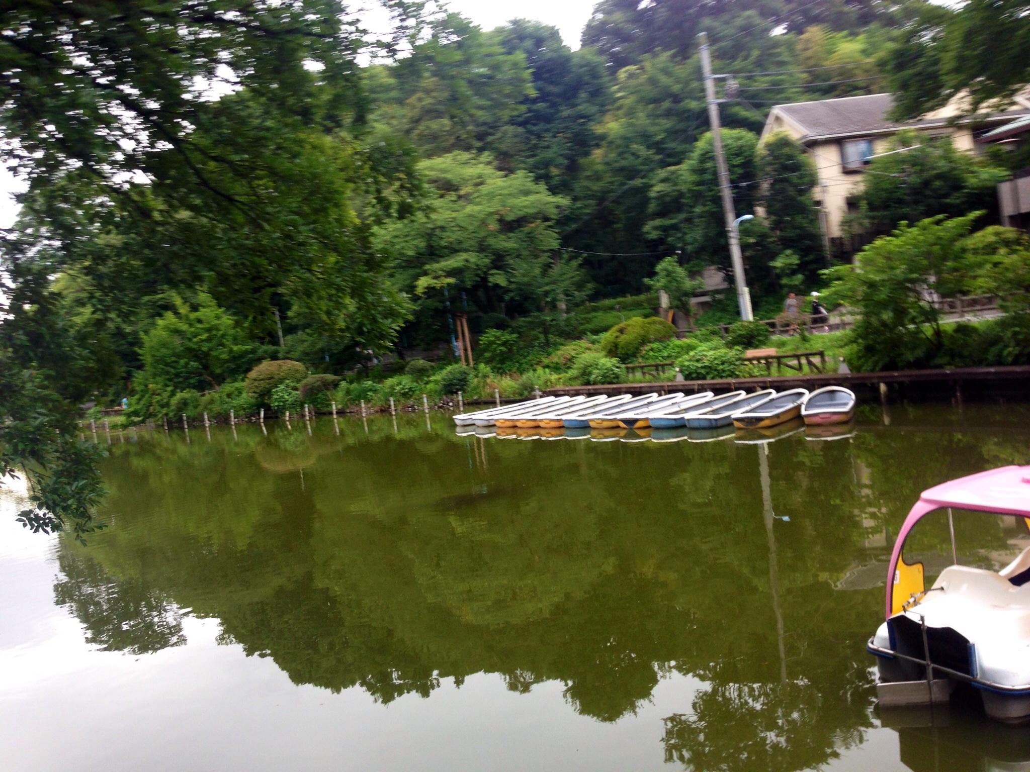 善福寺公園 ボート池