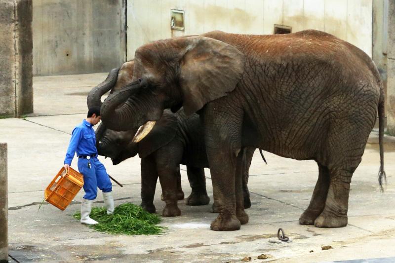 アフリカゾウさんのランチタイム