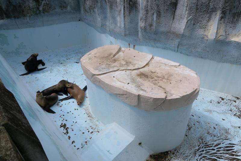 アシカさんのプールお掃除中