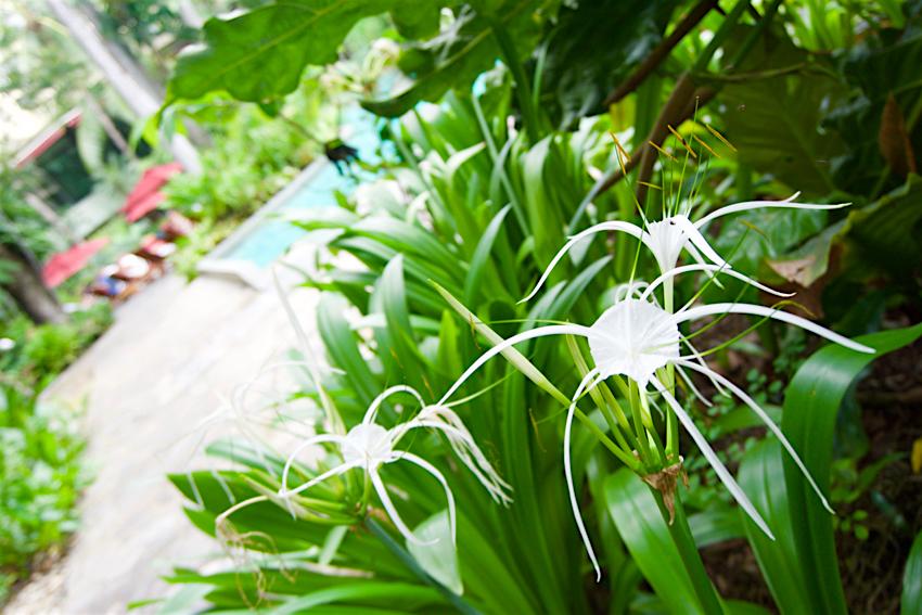 バンコク旅行記 ホテルのお花達3