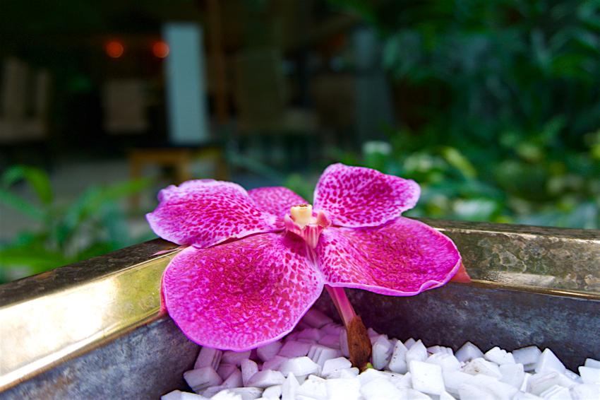 バンコク旅行記 ホテルのお花達2